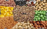 Efectele benefice ale semintelor